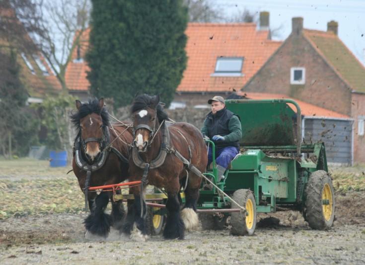 Thumbnail voor het recept: paarden in de landbouw