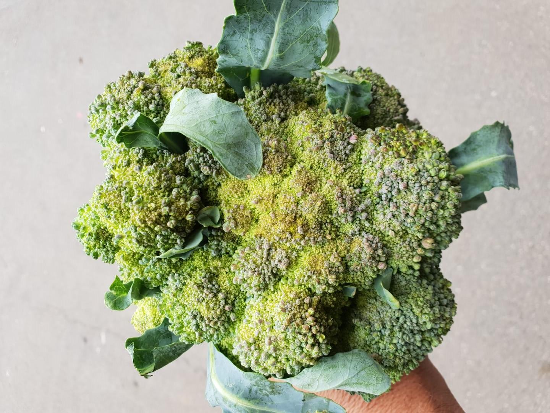 broccoli met afwijkende groei en bonte kleuren door droge en warme zomer 2018