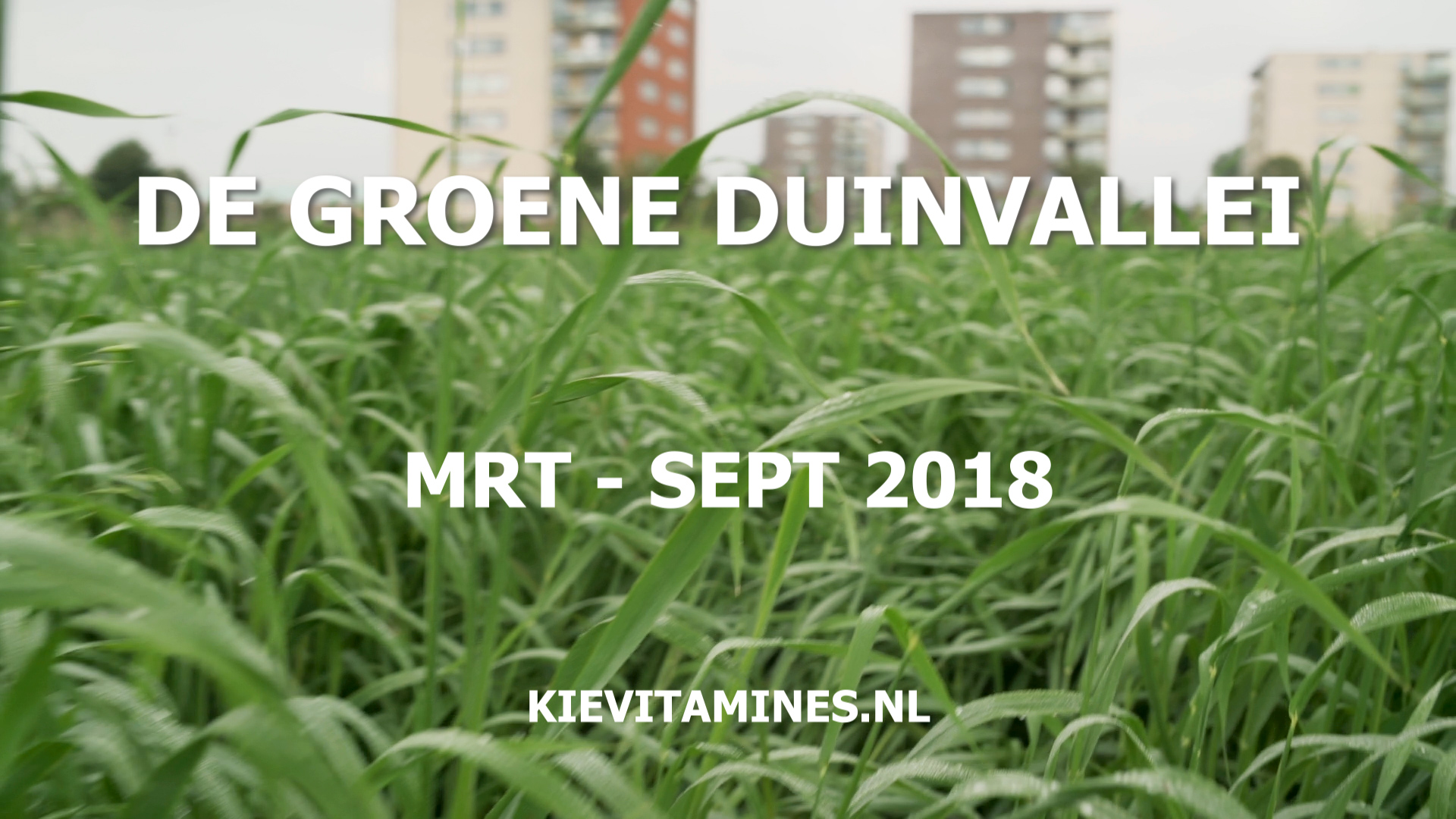 Kievit maart tot september 2018 stadslandbouwproject De Groene Vallei Duinvallei Katwijk aan de Rijn