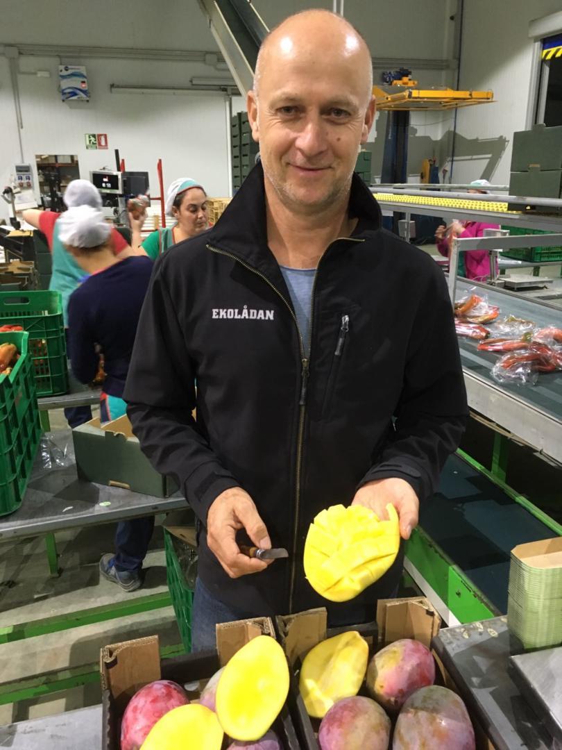 Floris van Solid Organic Link keurt de Osteen mango ter plekke.