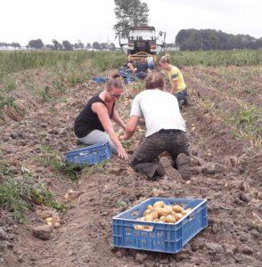 piepers oogsten voor Kievit