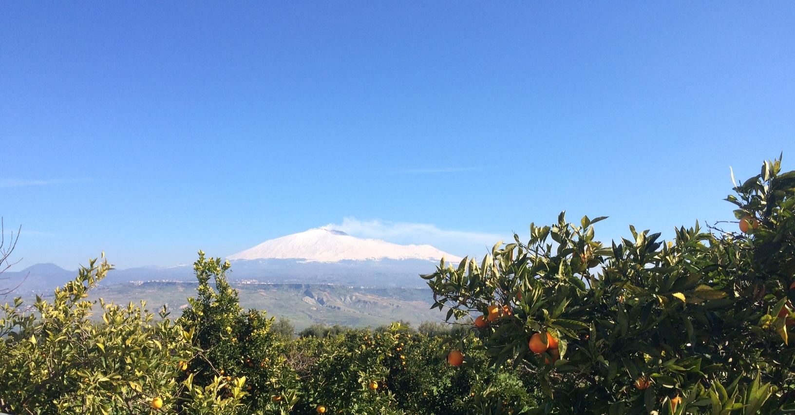 Tarocco's aan de voet van de Etna