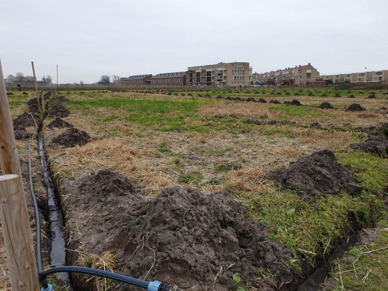 Thumbnail voor het recept: Kievit-tuin profiteert volop van klein lentemomentje