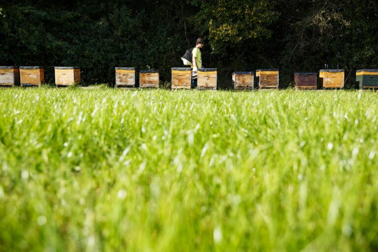 Thumbnail voor het recept: Honing van biologische Imkerij de Oase