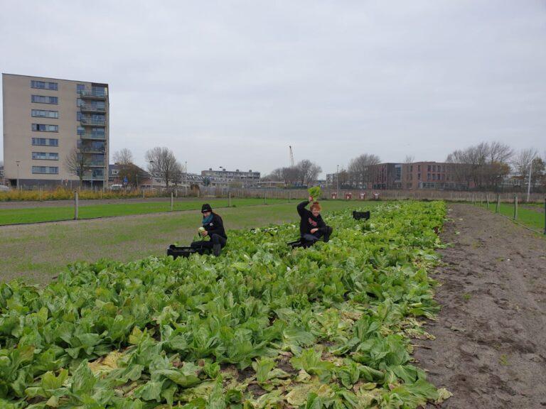 Thumbnail voor het recept: Groenlof als duurzaam alternatief